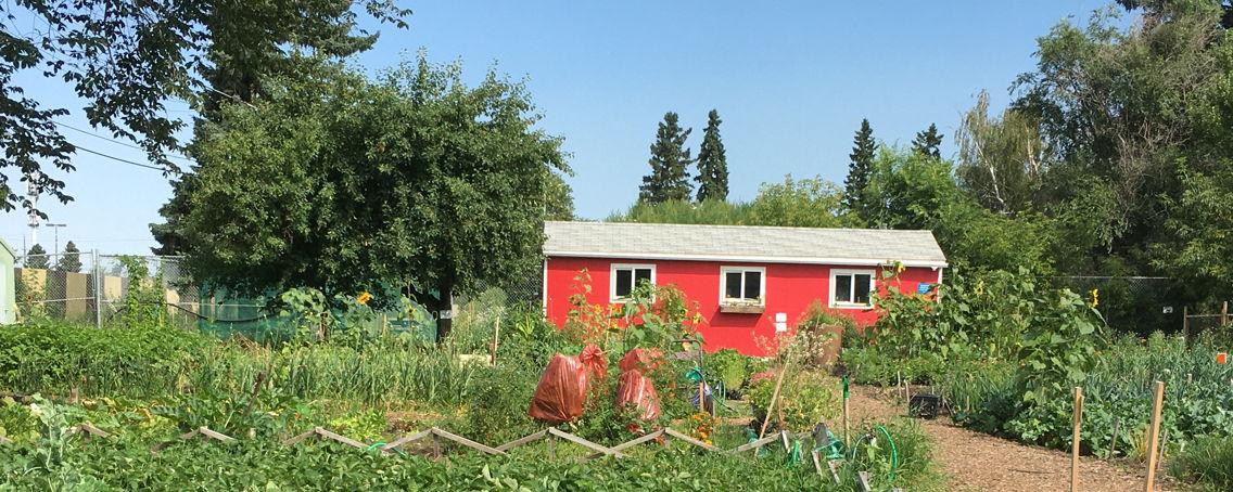 Northlands_Urban_Farm